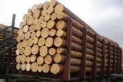 В тюменском области ведется развитие глубокой переработки леса.